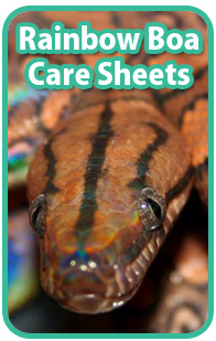 Rainbow Boa Care Sheets